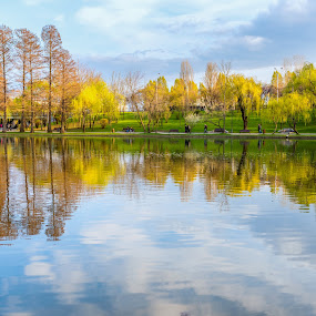Spring Colors  by Nitescu Gabriel - Landscapes Travel ( spring flowers, reflection, europe, waterscape, green, beautiful, reflections, romania, yellow, landscape, spring, lanscapes, bucharest, european, sky, springtime )