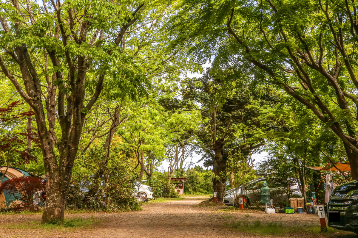 関東のおすすめ高規格キャンプ場9選【千葉県】有野実苑オートキャンプ場