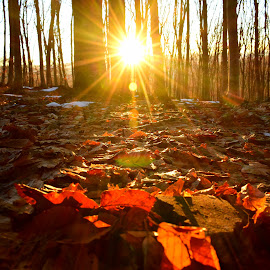 A beautiful sunset in the wood.☀️🍂 by Adrian Coman - Nature Up Close Leaves & Grasses (  )