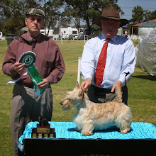 Photo: Best Intermediate, CH ROBSCOTT FLINDERS owned by Robyn Dryden