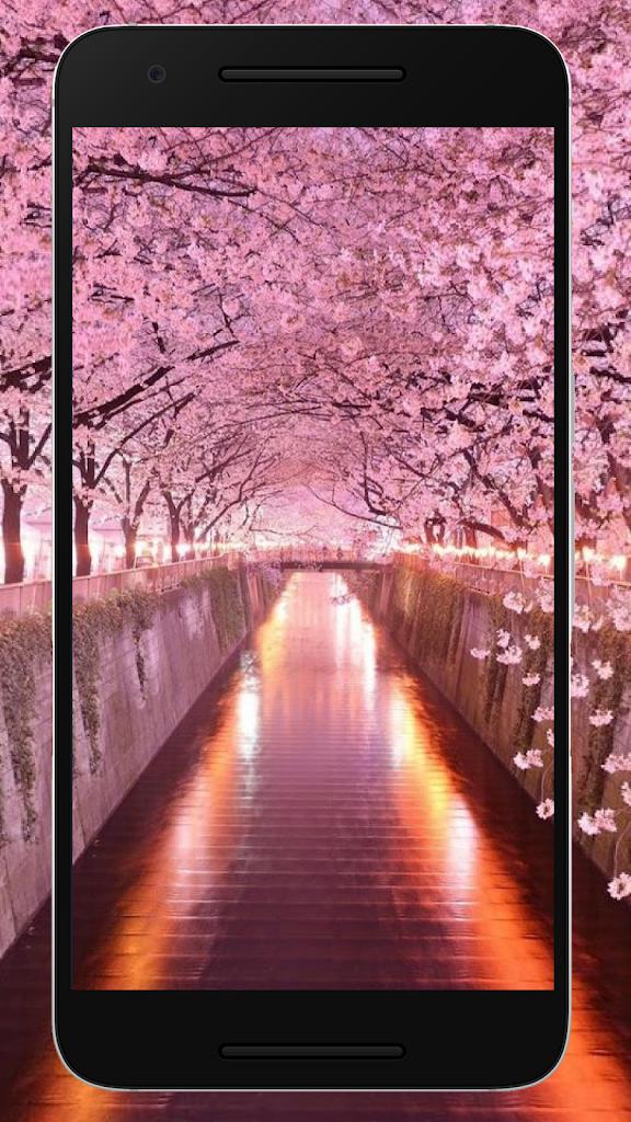 Wallpaper Bunga Sakura Hd Terbaru Untuk Android Apk Unduh