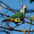 Niue Marine and Terrestrial Wildlife