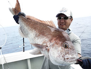 Photo: どひゃー!うわー!男前の真鯛!7.1kgありました!・・・さすが、大物ハンター!