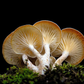 Mushrooms by Asif Bora - Nature Up Close Mushrooms & Fungi (  )