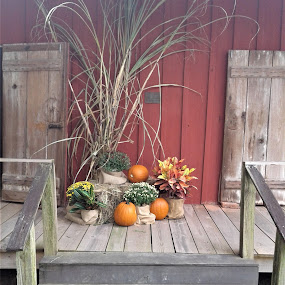 The Arrival of Autumn by Denise DuBos - City,  Street & Park  Historic Districts ( red, gold, pumpkins, green, arrival, rich tones, autumn, mums, oragne,  )