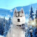 Cute Winter Wallpaper icon