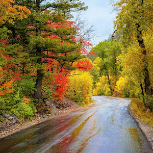 Fall Road (1 of 1).jpg