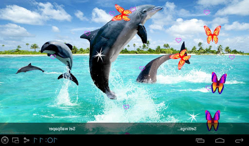 3D Dolphin LWP