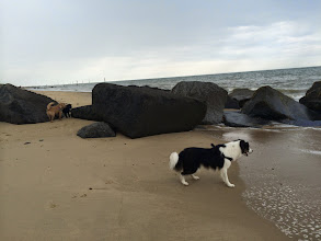 Photo: Leo, Monty and Galu on Waxham beach