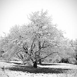 Version 2 by Драган Рачићевић - Nature Up Close Trees & Bushes (  )
