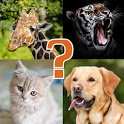Animal Quiz - Learn All Animals and Birds icon
