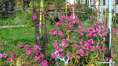 Photo: nette gärten und alte häuser - hier war ich noch nie