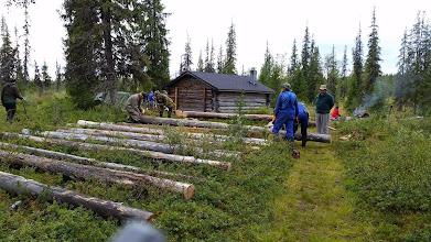 Kuva: paljon oli puita, mutta sopivaa ei tahtonut löytyä