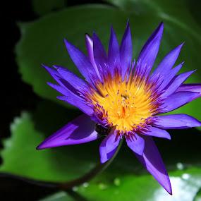 by Mc Melwyn Vergado - Novices Only Flowers & Plants