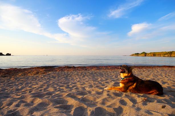 Rocamar море България