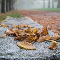 il parco in autunno  .... di