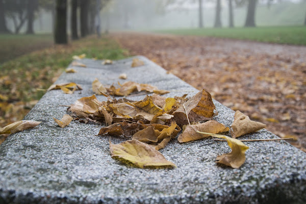 il parco in autunno  .... di Rooss