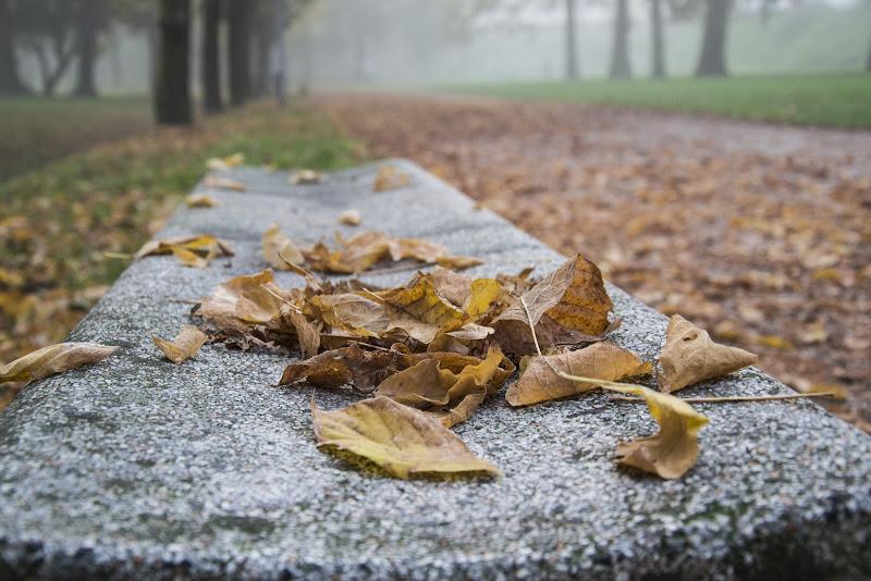 il parco in autunno  .... di paolo_ross