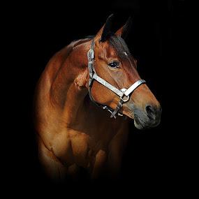 Horse by Alessandra Cassola - Animals Horses ( #horses, #horse, #animal )
