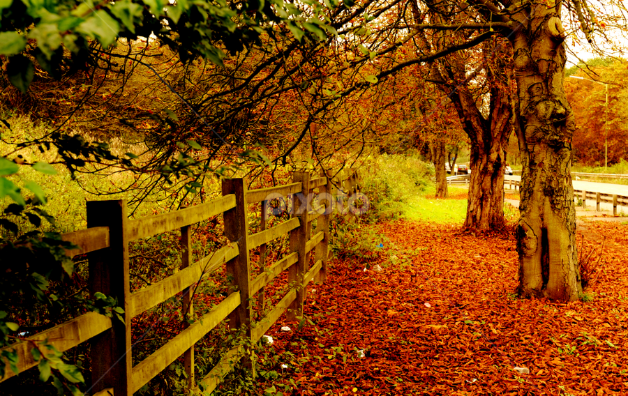 by Vineet Johri - Landscapes Forests ( orange, autumn, colors, pwcautumn, leaves, nature, fall, abscission, folliage,  )