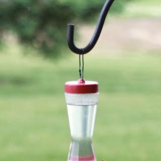 Hummingbird Food