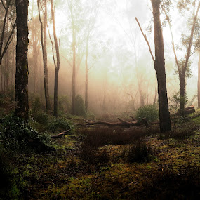 Lane Pool Reserve by William Greenfield - Landscapes Forests ( tree, fog, australia, bush, mist, western australia )