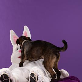 by Myra Brizendine Wilson - Animals - Dogs Portraits ( pets, dogs, canine, dog, pet,  )