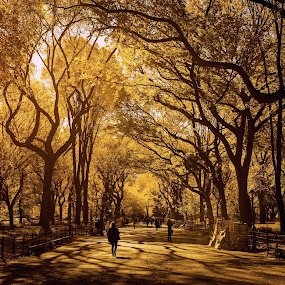 Golden park by Dejan Gavrilovic - City,  Street & Park  City Parks ( park parks fall foliage people in park photodejan, New York, , fall, color, colorful, nature )