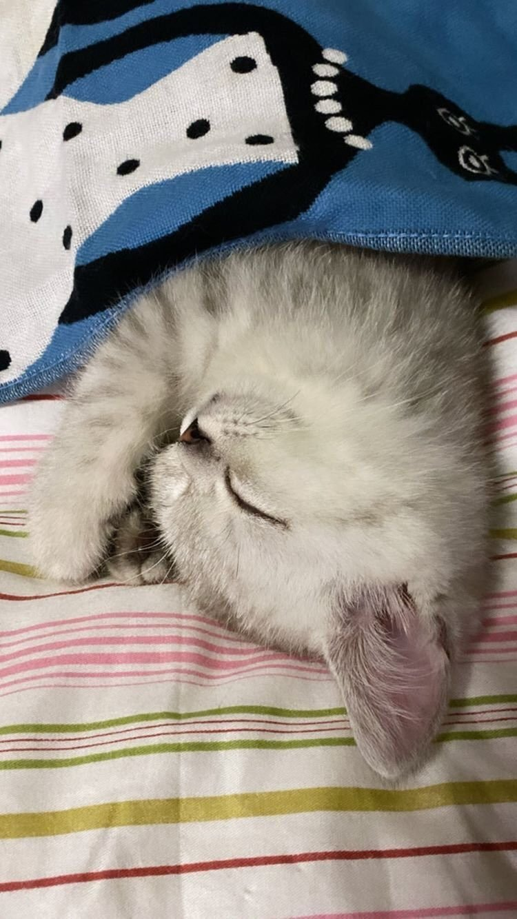 3-BLACKPINK-Lisa-Cat-Louis