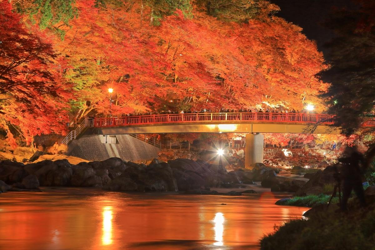 Khung cảnh lá phong đỏ mùa thu đẹp đến nao lòng