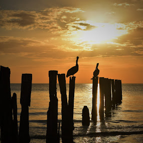 Pelicans and Piers by Lorna Littrell - Landscapes Sunsets & Sunrises ( piers, sunsets, pelicans, seascape, waterscapes,  )