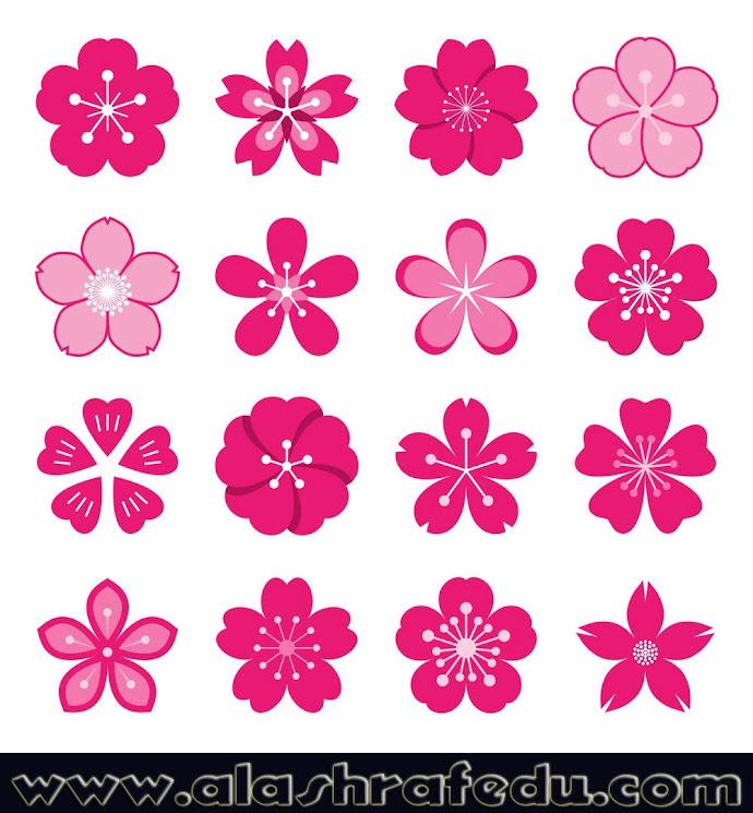 Sakura Icons Isolated White Background hjcaxfMjkeWdmihaoWdh