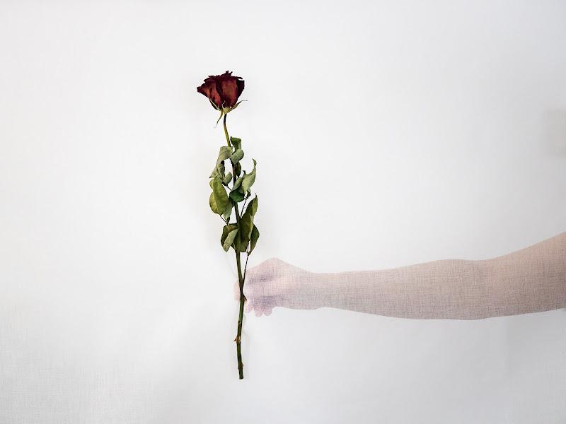 Cogli la rosa quando è il momento, ché il tempo lo sai che vola di E l i s a E n n E