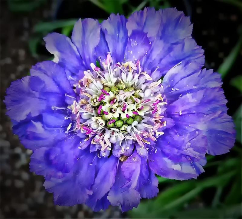 blu cobalto di MaxFelice