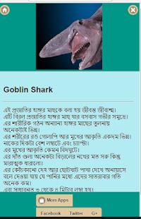 ১০টি আশ্চর্যরকম হাঙ্গর screenshot 2
