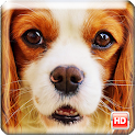 Dog Wallpapers icon