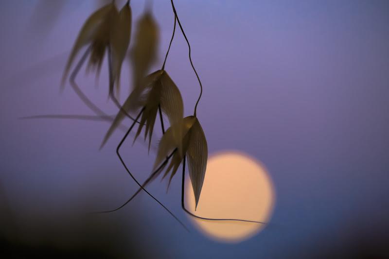 Dancing with the moon di Tindara
