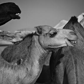 by Nordan Malabuyoc - Animals Other