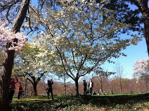 Photo: Blossoms @ Brooklyn Botanic Gardens