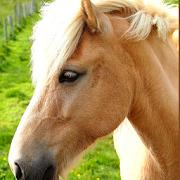 Most Beautiful Horses Images APK