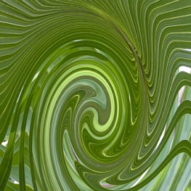 Fern Twirl by Gwen Paton - Abstract Patterns ( plant, fern, green, florida,  )