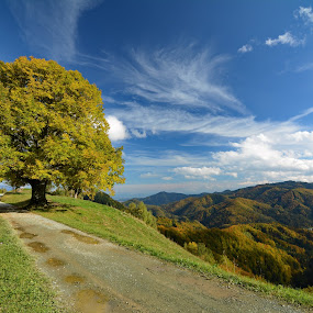 Autumn in Slovenia by Zoran Stanko - Landscapes Mountains & Hills ( clouds, hill, nature, tree, autumn, grass, fall, slovenia, path, road, landscape, zoran stanko )