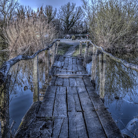 wooden bridge by Natalie Zvonar - Landscapes Waterscapes (  )