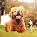 Dog HD  Wallpapers icon