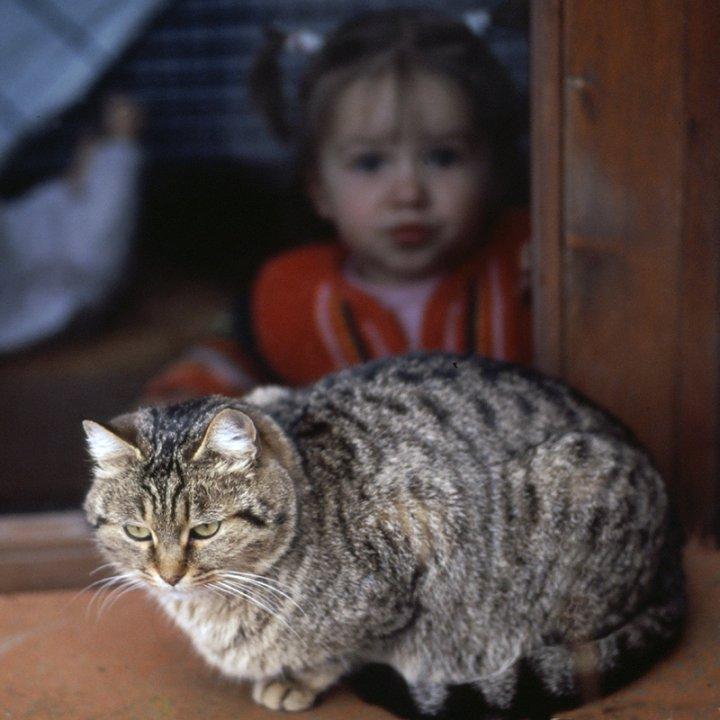il gatto e la bimba di barbelfo