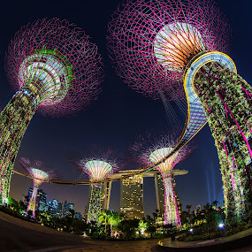 Super Tree by Lb Chong Jacobs - Buildings & Architecture Architectural Detail