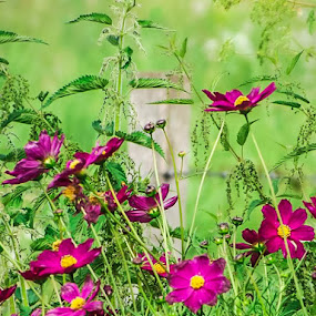 flowers by Raluca Bălan - Flowers Flowers in the Wild ( grass, green, landscape, flowers, photography )