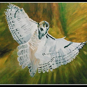 horned owl by Paul Robin Andrews - Painting All Painting ( picture, bird, nature, owl, horned, oil painting )