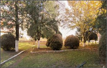 Photo: Buxus, Cimisir, Banut, (Buxus sempervivens)              , din Turda - Str. Rapsodiei, Nr.6-8 - spatiu verde - 2018.10.31