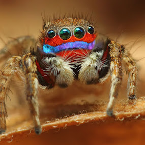 Rainbow by Karthi Keyan - Animals Insects & Spiders